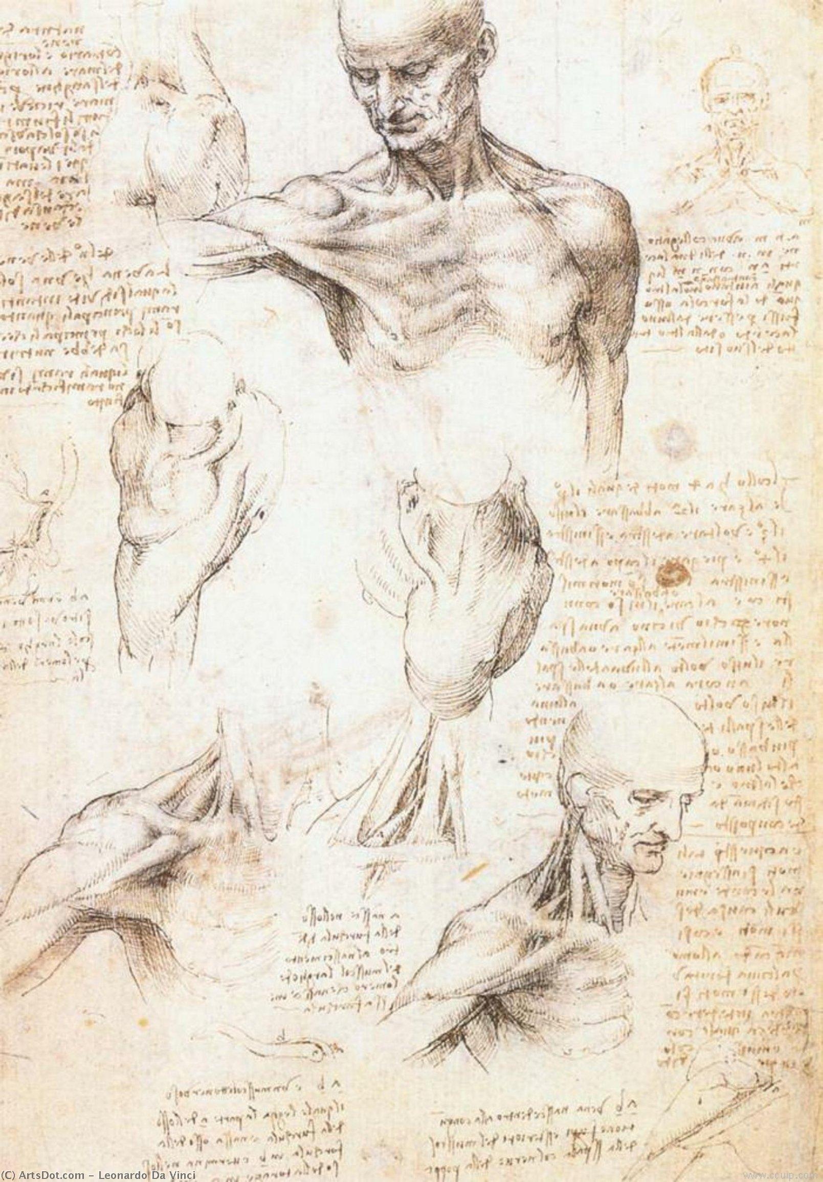 Anatomische Studien von Ein Mann Achsel , stift von Leonardo Da ...