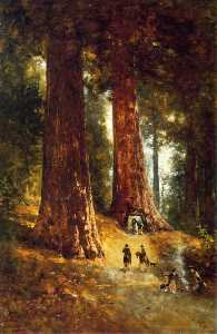 Thomas Hill - In den Redwoods