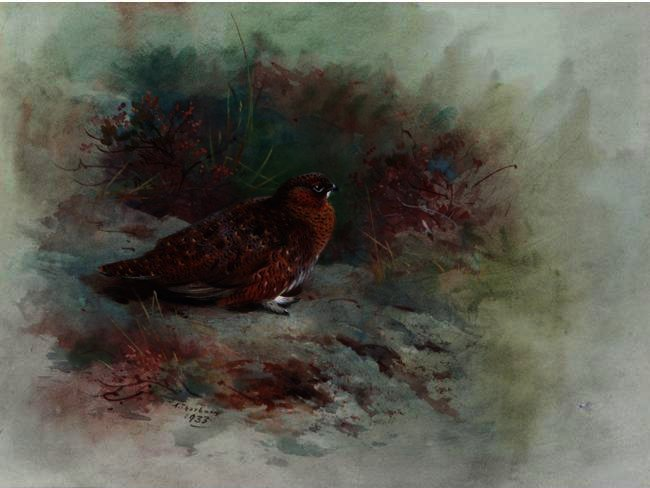 A Grouse, wasserfarbe von Archibald Thorburn (1860-1935, United Kingdom)