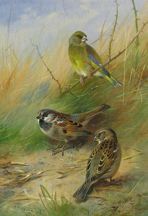 A Pair Of Sparrows And A Grünfink, wasserfarbe von Archibald Thorburn (1860-1935, United Kingdom)
