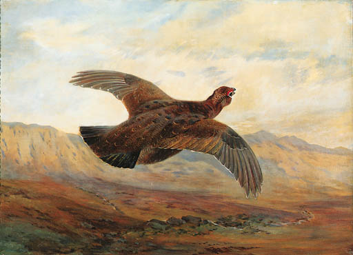 A Red Grouse im Flug über Moorland, Aquarell von Archibald Thorburn (1860-1935, United Kingdom)