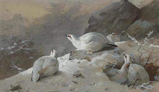 Ptarmigan im Wintergefieder, Aquarell von Archibald Thorburn (1860-1935, United Kingdom)