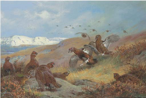 Red Grouse Am Moorland, Aquarell von Archibald Thorburn (1860-1935, United Kingdom)