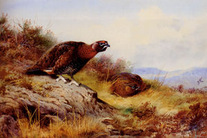 Archibald Thorburn - Red Grouse auf dem Moor