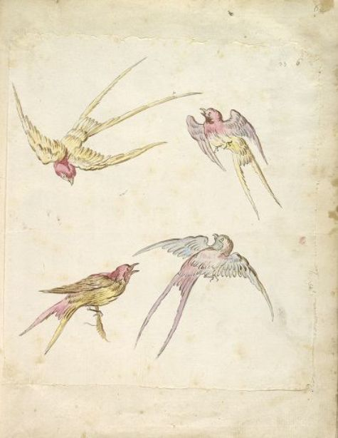 Four Swallows, gehockt und Drei in Flight von Jean-Baptiste Oudry (1686-1755, France)