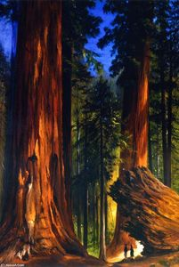 Gilbert Munger - Giant Sequoias