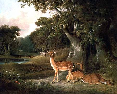 hirsch in Ein  bewaldet  Landschaft ein  von Thomas And William Daniell (1769-1837, United Kingdom)