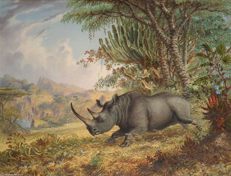 The Black Rhinoceros von Thomas Baines (1820-1875, United Kingdom)