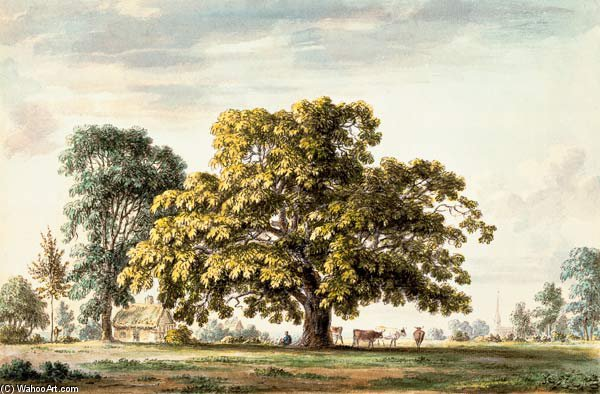 A Walnut Tree At Denton, in der Nähe von Grantham und von Anthony Devis (1729-1816, United Kingdom)