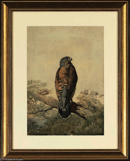 Ein Turmfalke thront von Archibald Thorburn (1860-1935, United Kingdom)