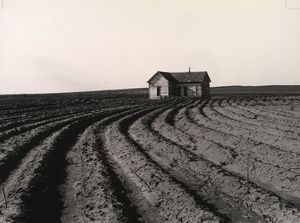 Dorothea Lange - Tractored heraus, Childress County, Texas