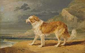 James Ward - rauer überzogener collie