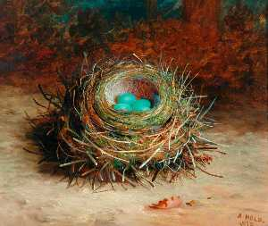 Abel Hold - Hecke Sparrow's Nest